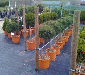 oblikovane rastline