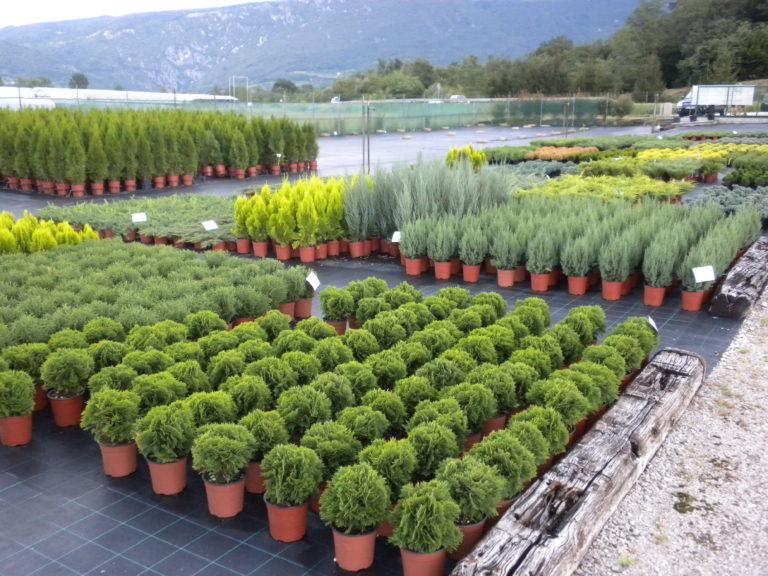 drevesnica vrtnarija horti